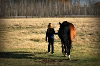 paardenkracht voor pubers Winschoten