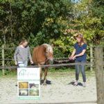 paardenkracht voor pubers