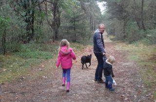 hondencoaching