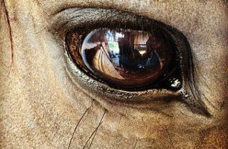 kennismakingsworkshop paardencoaching