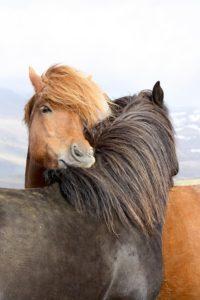 niet ik zoek het paard