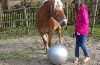 Paardenkracht voor Pubers in Haren op 13 mei