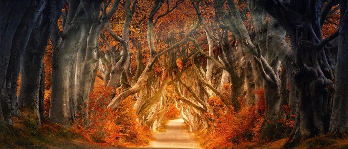 wat leert de herfst ons?