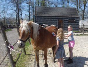De dagelijkse verzorging van het paard