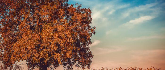 begin van de herfst
