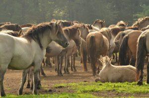 de buitenkant van het paard