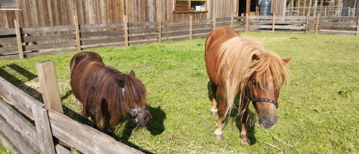 Pony Pret dag op zaterdag 28 augustus
