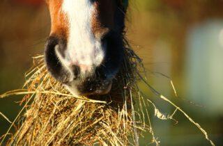 dagelijkse verzorging van het paard